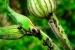 C mo eliminar los insectos de las plantas for Como eliminar los mosquitos del jardin